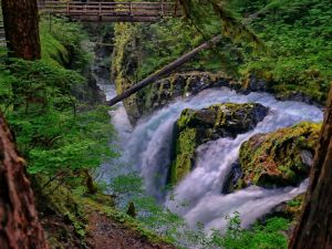 Waterfall in Olympic National Park (Washington)