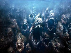 Killer piranhas