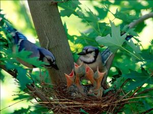 Family of birds