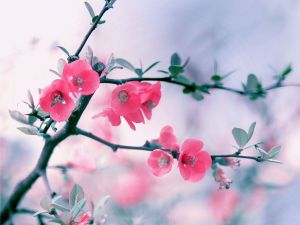 Branch with beautiful pink flowers
