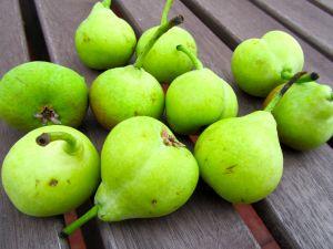 Pears of San Juan