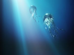 Big jellyfishes swimming towards the surface