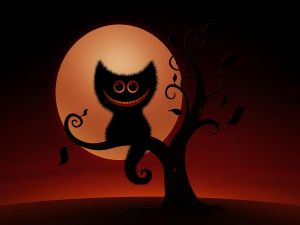 Smiling cat in a tree at night