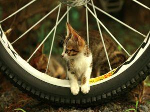 I like riding a bike!