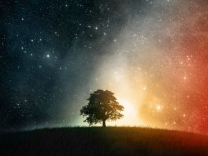 Lonely tree under the firmament