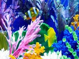 Very colorful aquarium