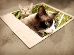 Two cats leaving from a photo