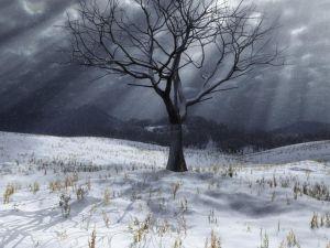 Leafless tree in a snowy landscape