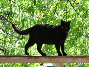 A black cat on the railing