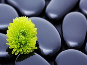 Green flower over black stones