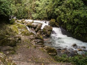 Affluent in Guaramacal National Park