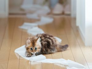 Kitten with toilet paper