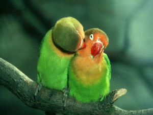 Lovebirds in love