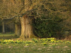 Yellow flowers next to a leafless tree