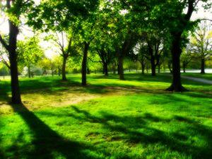 Shadows among trees