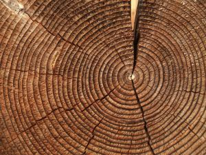 Rings of a tree trunk