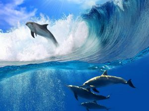Dolphins under the wave