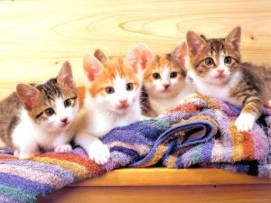 Four kittens on a towel
