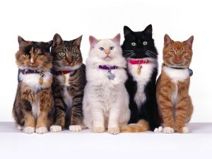 Five cats very elegant