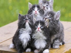 Kittens looking at the sky