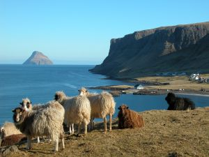 Sheeps near the sea
