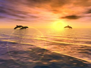 Three dolphins jumping at sunset