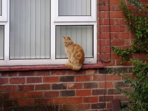 Cat sitting on the window
