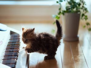 Kitten playing piano