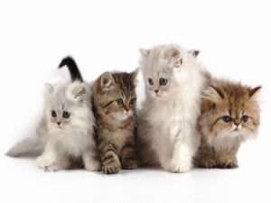 Four little cats