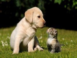 Gaze between dog and cat