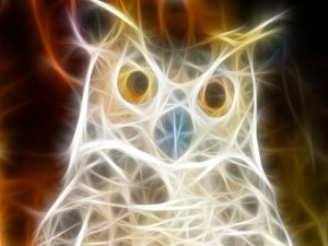 Owl of light