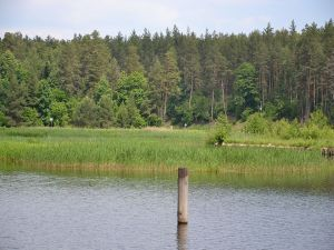 Borderline between Poland and Belarus (Augustów Channel)