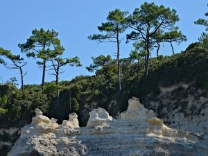 Rocks and pine trees