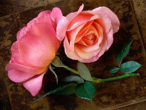 Freshly cut roses