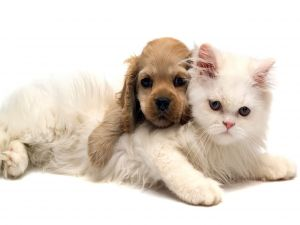 Cat and dog puppy