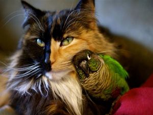Cat with budgerigar