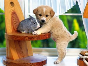 Puppy and rabbit