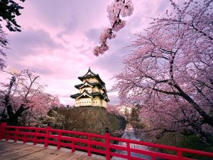Japanese building among cherry blossoms