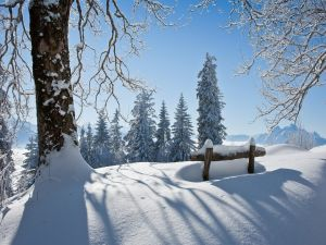 Snow covered landscape