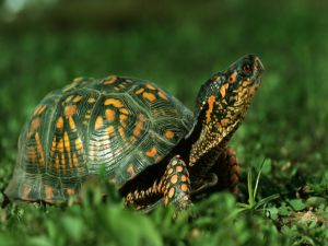 Turtle with pretty colors