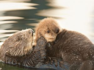 Otter with her pup