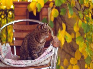 A kitten over a chair