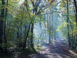 Path in the forest of Grimbosq (Calvados, France)