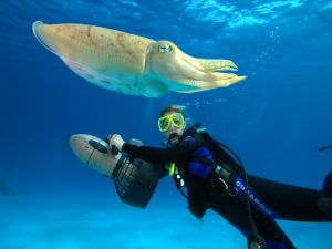 Diving next to a big sepia