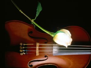 A rose and a violin