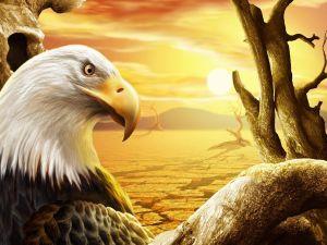 Eagle in the desert