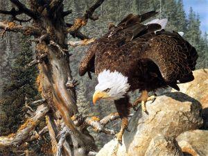 Eagle lurking
