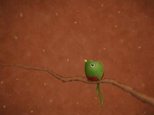 Small Quetzal