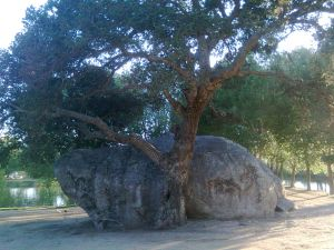 A tree next to a stone