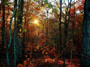 Evening falls in an autumnal forest